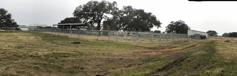 Cattle Pens